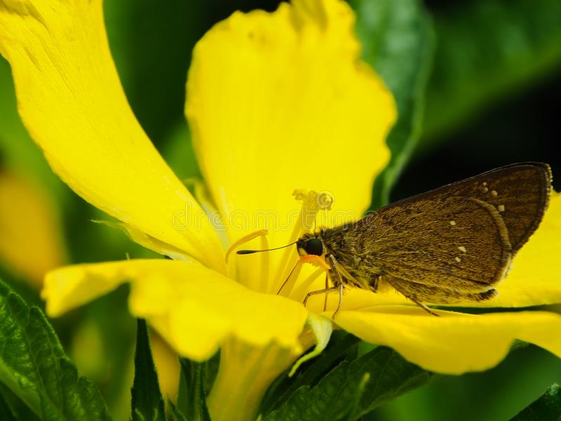 Mariposa del primer en una flor imagenes de archivo