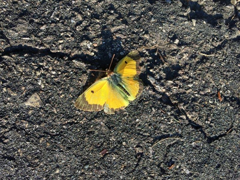 Mariposa en el asfalto imagenes de archivo