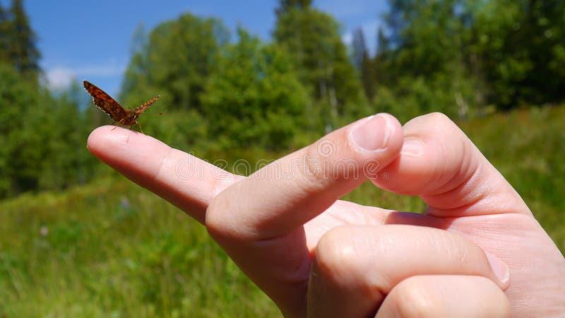 Mariposa en el finger fotografía de archivo libre de regalías