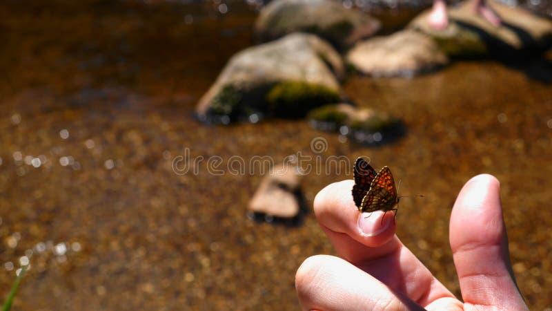Mariposa en el finger imagen de archivo