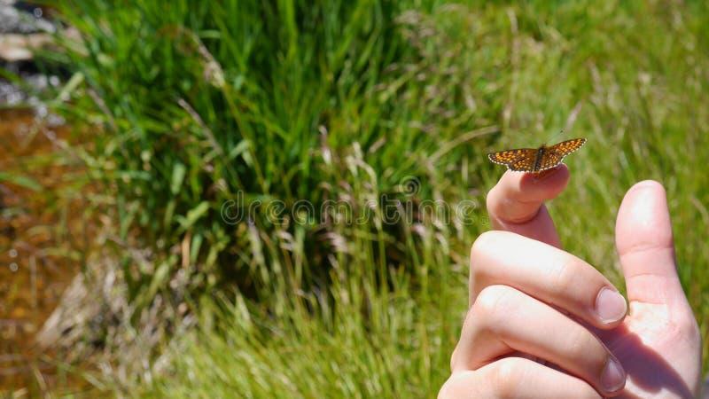 Mariposa en el finger foto de archivo