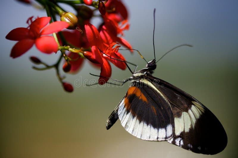 Mariposa en el flor imágenes de archivo libres de regalías