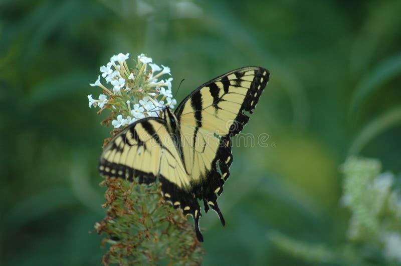 Mariposa en el trabajo fotos de archivo libres de regalías
