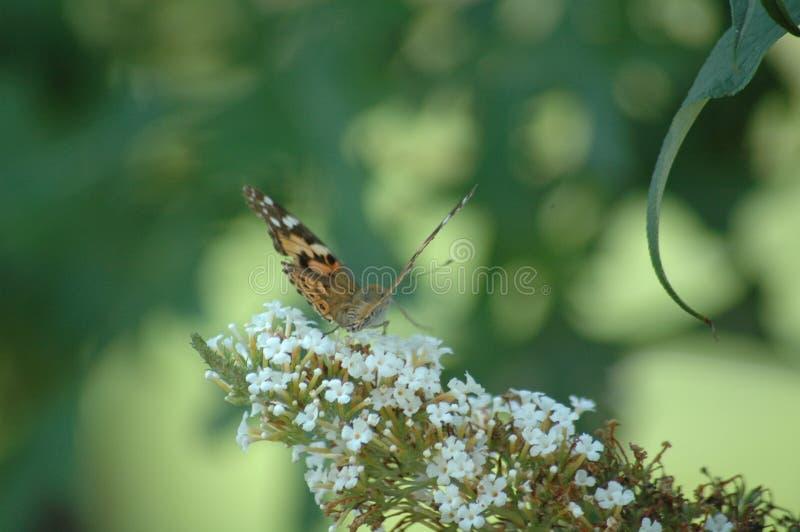 Mariposa en el trabajo foto de archivo libre de regalías