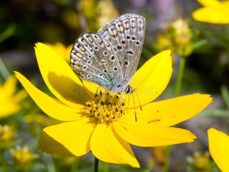 Mariposa en flowerer fotografía de archivo