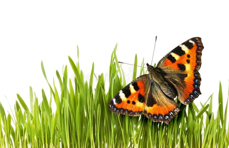 Mariposa en hierba fotografía de archivo