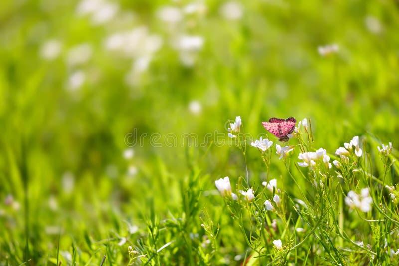 Mariposa en hierba verde foto de archivo