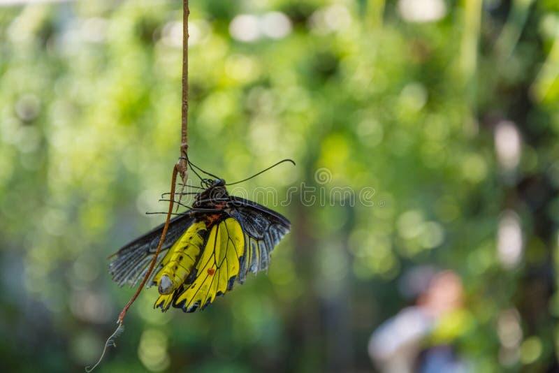 Mariposa en jardín foto de archivo libre de regalías