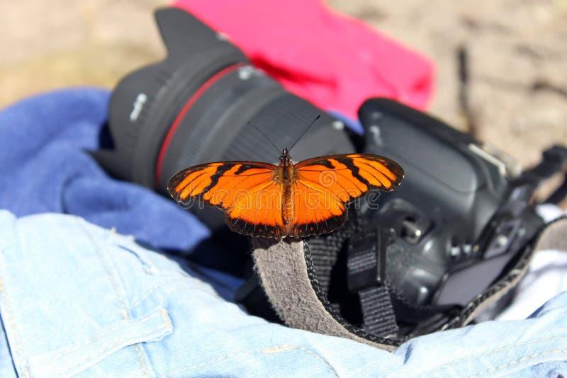 Mariposa en la cámara fotos de archivo