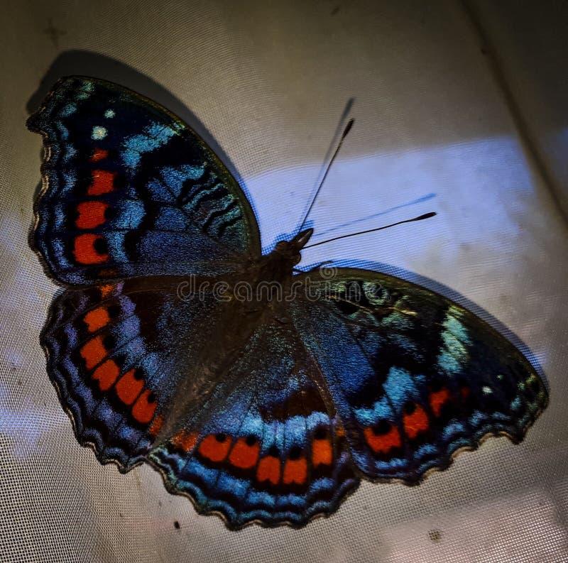 Mariposa en la cortina foto de archivo libre de regalías