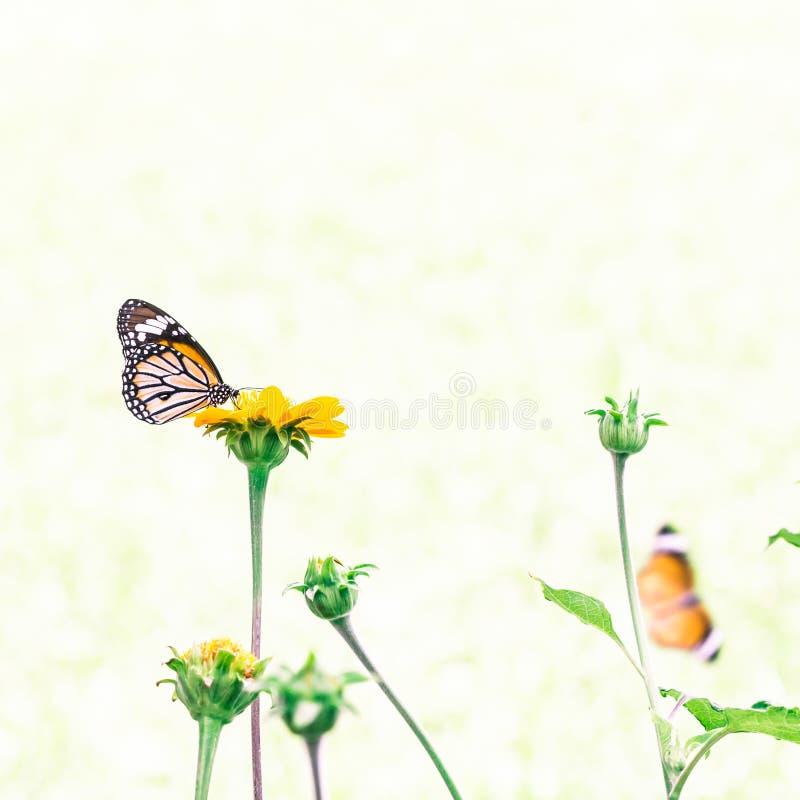 Download Mariposa en la flor foto de archivo. Imagen de mosca - 42425332