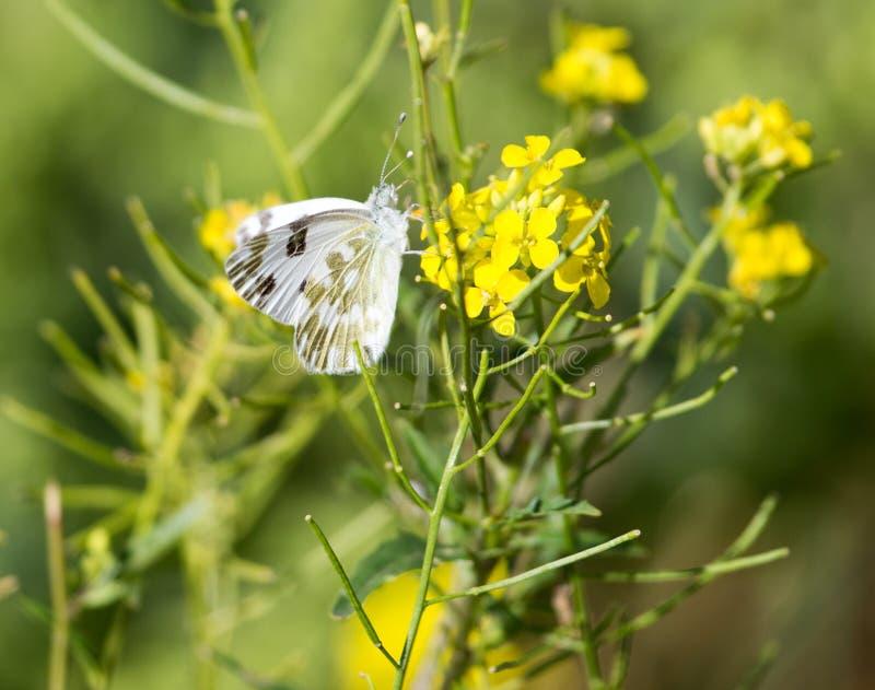 Mariposa en la flor amarilla en naturaleza fotos de archivo