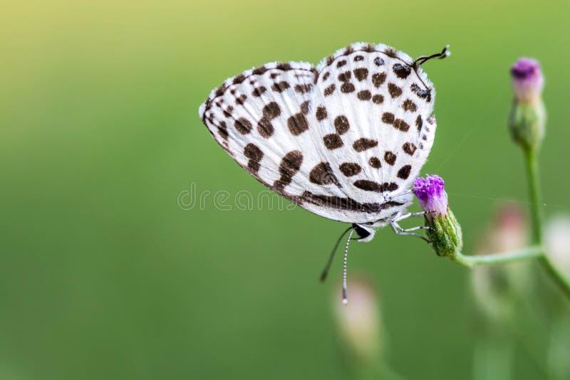 Mariposa en la flor de la hierba imagen de archivo libre de regalías