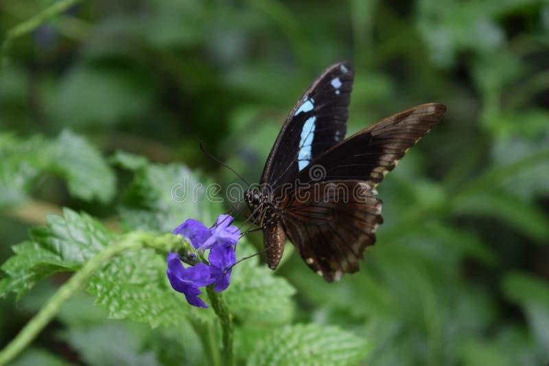 Mariposa en la flor en el parque local en Chester fotografía de archivo