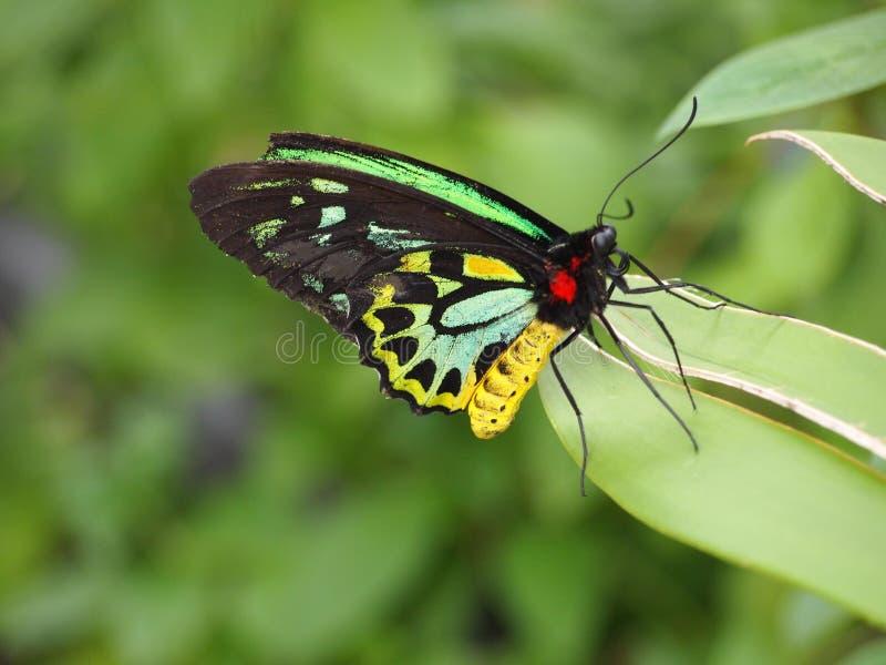 Mariposa en la hoja foto de archivo