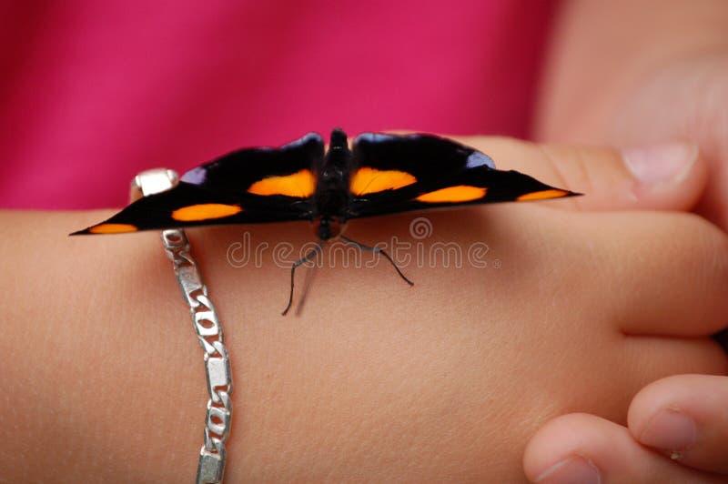 Mariposa en la mano imagenes de archivo