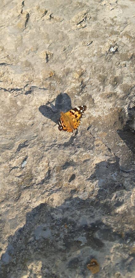 Mariposa en la piedra imagen de archivo libre de regalías
