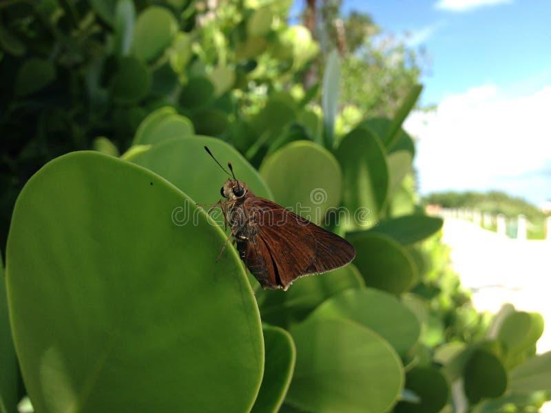 Mariposa en la playa del sur, Miami fotos de archivo