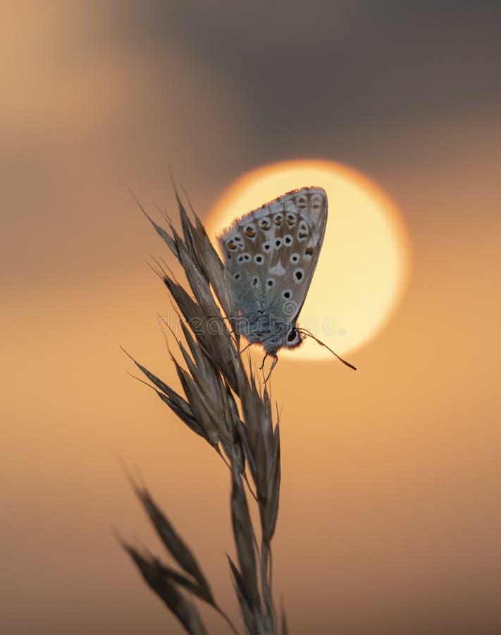 Mariposa en la puesta del sol fotos de archivo