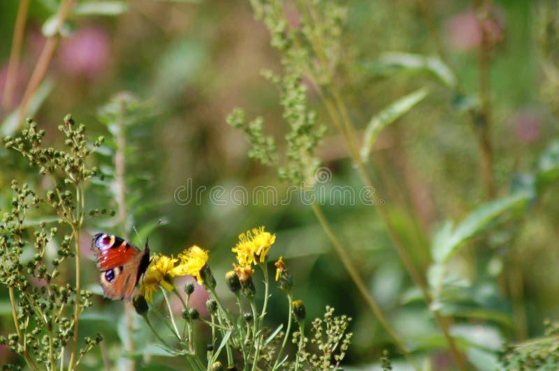 Mariposa en las flores imágenes de archivo libres de regalías
