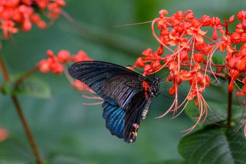 Mariposa en las flores en jardín botánico en Hong Kong imagenes de archivo
