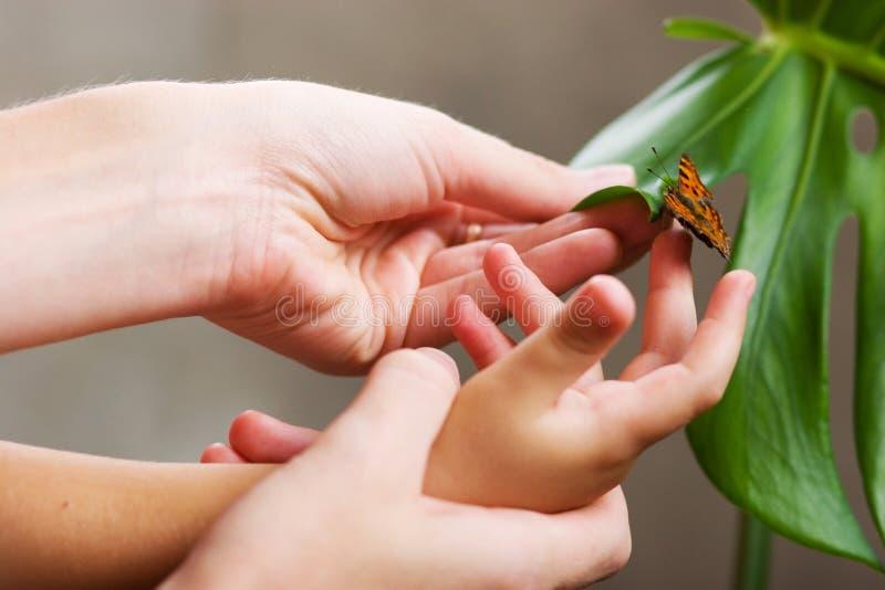 Mariposa en manos imagen de archivo