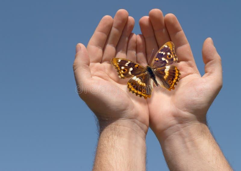 Mariposa en manos imagenes de archivo