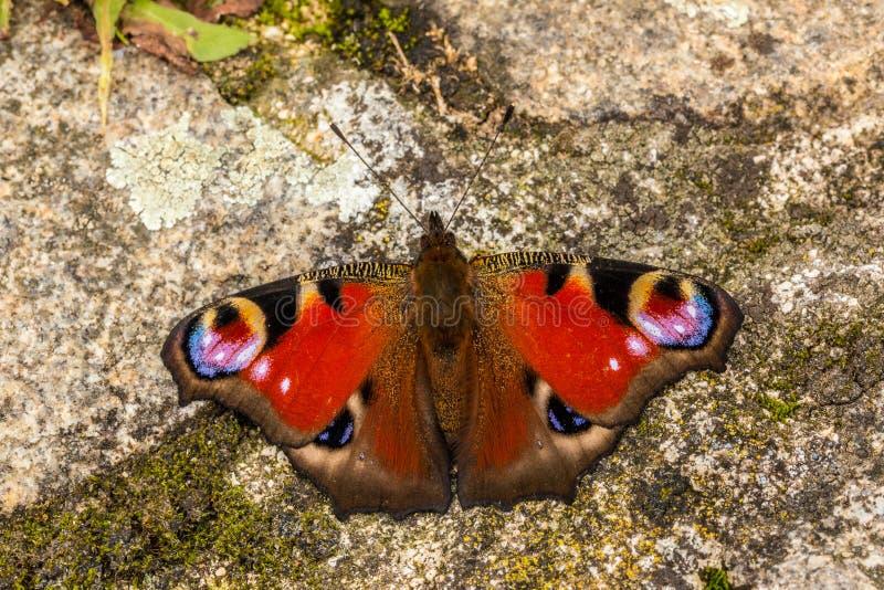 Mariposa en rocas fotografía de archivo