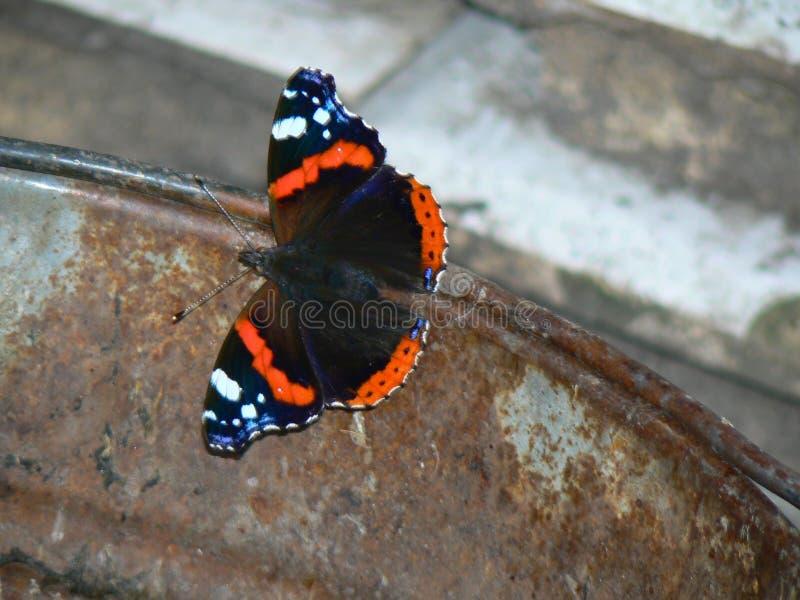 mariposa en un cubo imagenes de archivo