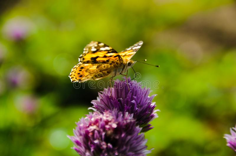 Mariposa en un jardín de flores imagen de archivo