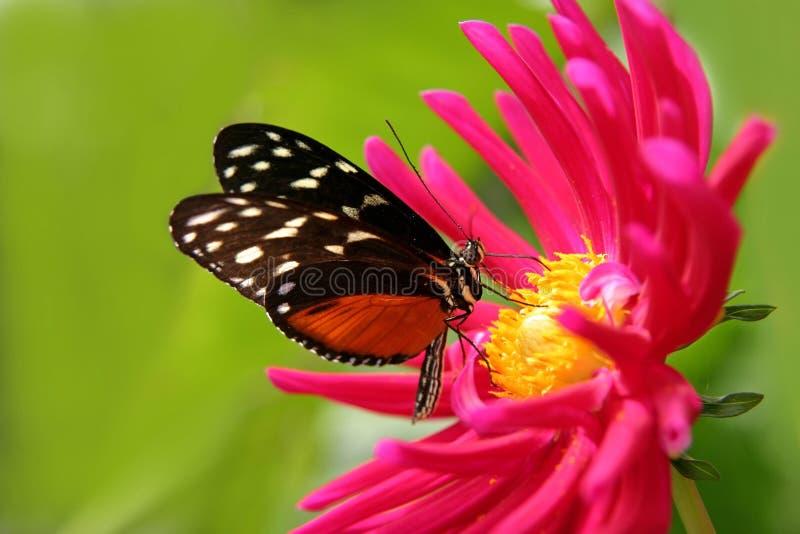 Mariposa en una flor fotos de archivo libres de regalías