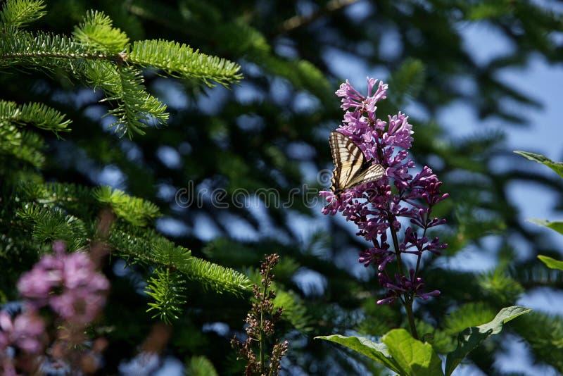 Mariposa en una flor salvaje foto de archivo libre de regalías
