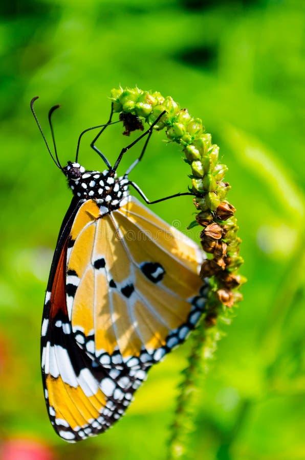 Mariposa en una flor verde imagenes de archivo