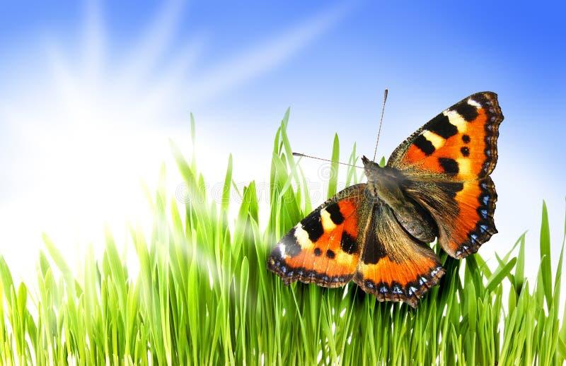 Mariposa en una hierba fotografía de archivo