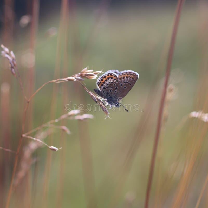 Mariposa en una hoja de la hierba imagenes de archivo