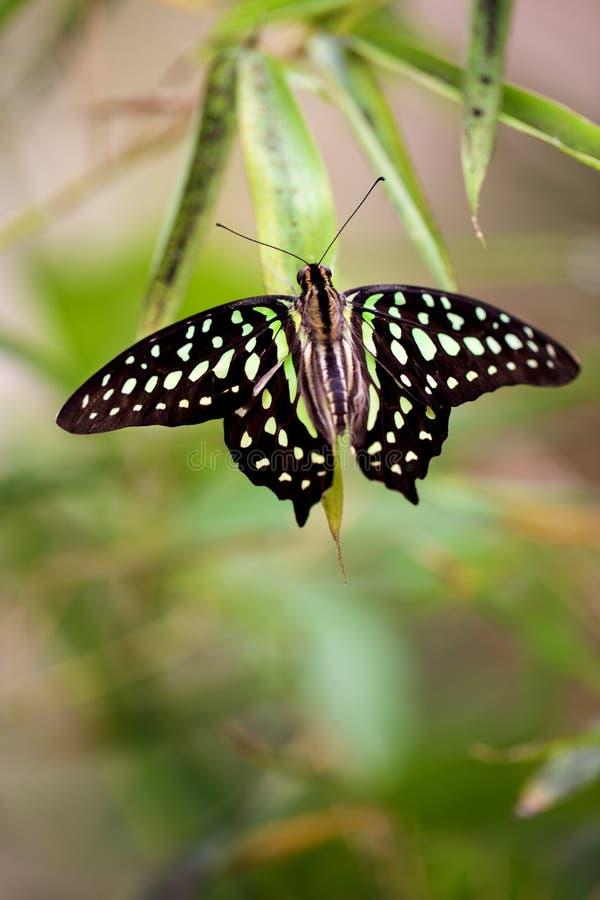 Mariposa en una hoja en la naturaleza imagenes de archivo