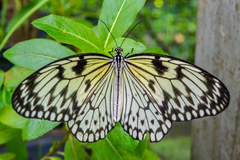 Mariposa en una hoja verde fotos de archivo
