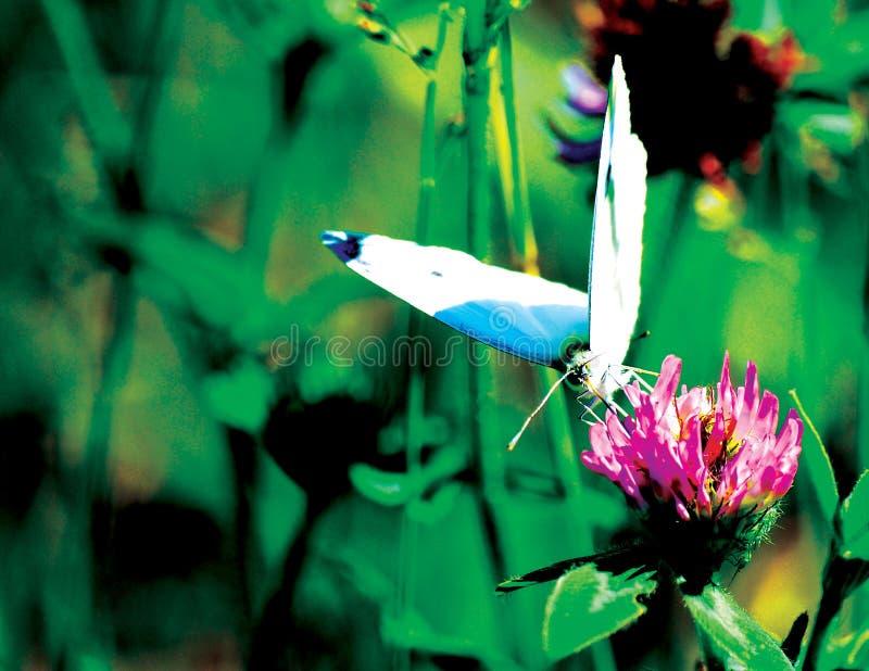 Mariposa encaramada en un tronco imagen de archivo