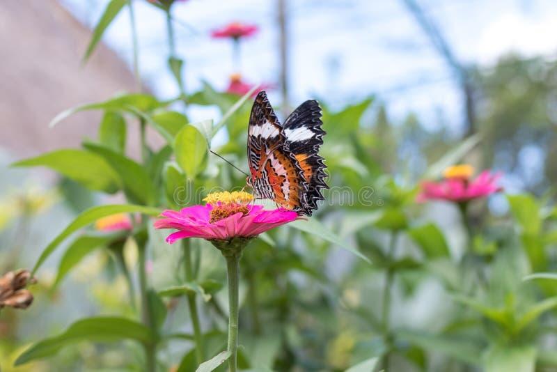 Mariposa Exótica En Las Flores, Mariposa Hermosa Y Flor En El Jardín ...