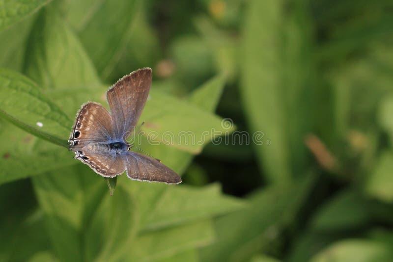 Mariposa gris fotografía de archivo libre de regalías
