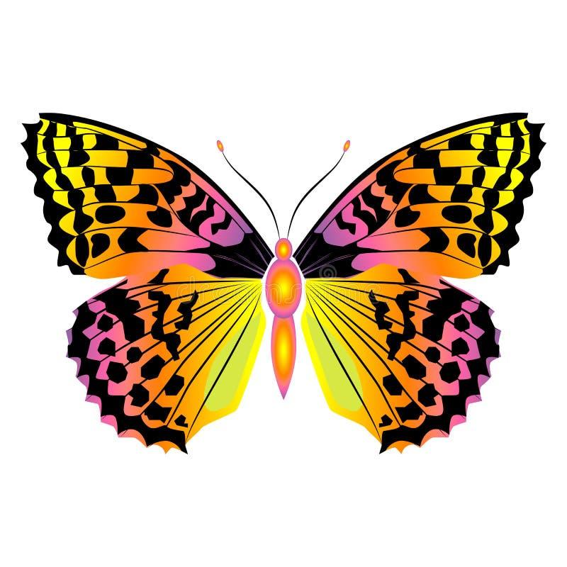 Mariposa hermosa brillante Ilustración del vector aislada fotos de archivo