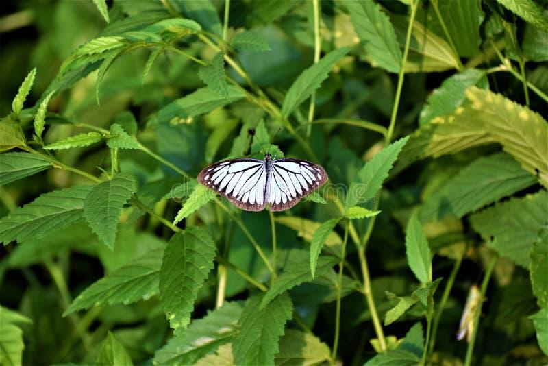 Mariposa hermosa coloreada agradable fotos de archivo