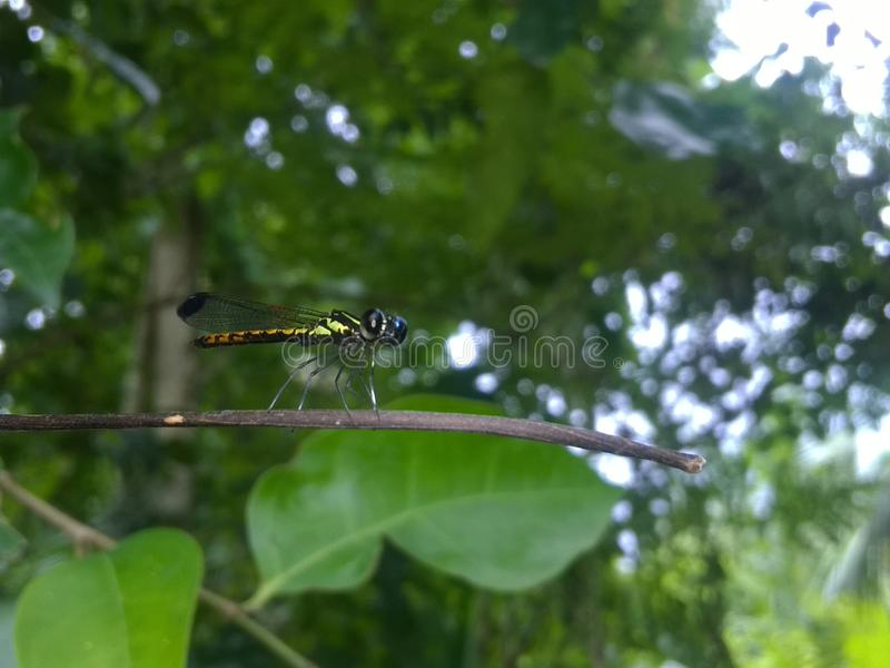 mariposa hermosa de Sri Lanka imagen de archivo