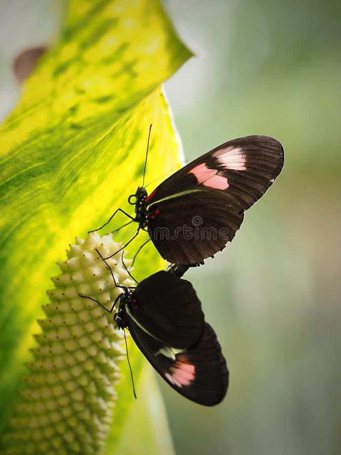 Mariposa hermosa en Chester foto de archivo libre de regalías