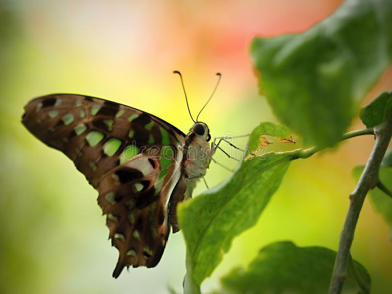 Mariposa hermosa en Chester imagen de archivo