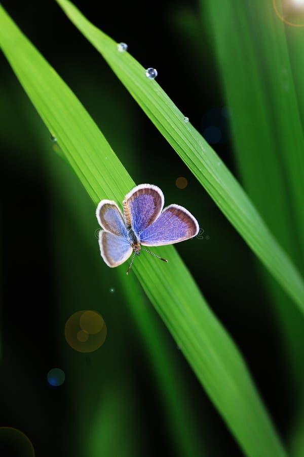 Mariposa hermosa en la hoja verde foto de archivo