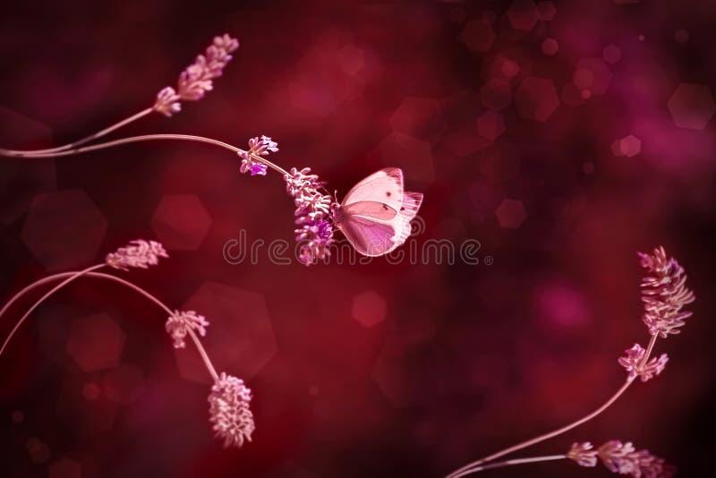 Mariposa hermosa roja en flores rojas Fondo de Borgoña fotos de archivo