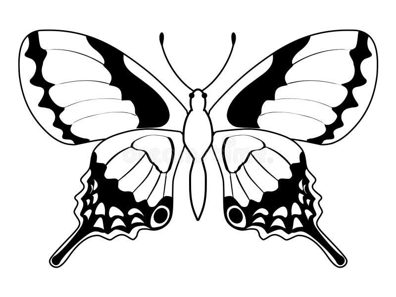 Mariposa, insecto libre illustration