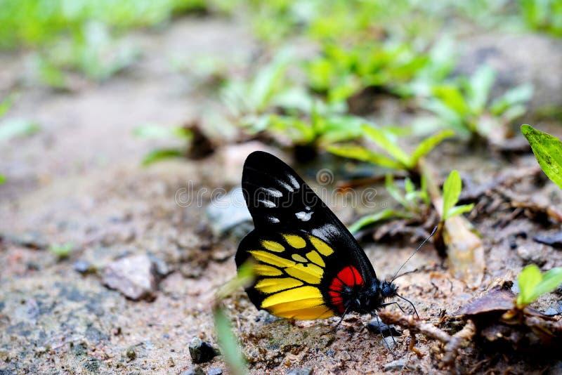 Mariposa, insectos hermosos y coloridos fotos de archivo