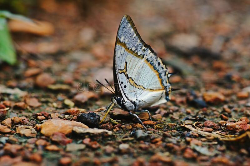 Mariposa, insectos hermosos y coloridos fotografía de archivo libre de regalías